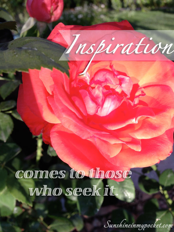rose-inspiration-comes-to-those-who-seek-it