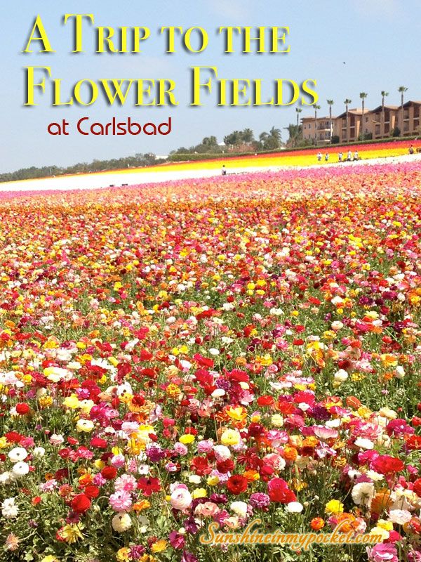 a-trip-to-the-flower-fields